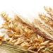 Зростання цін на зернові культури