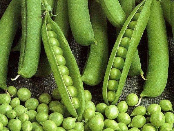 Низька врожайність гороху спричиняє зростання ціни на нього