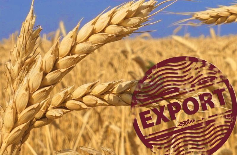 Експорт зерна може опинитись під загрозою через незаконні дії правоохоронців