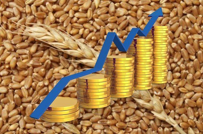 На світових ринках зростає ціна на пшеницю