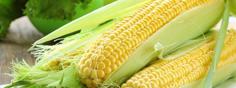 Важливсть правильного вибору гібриду кукурудзи у боротьбі зі шкідниками