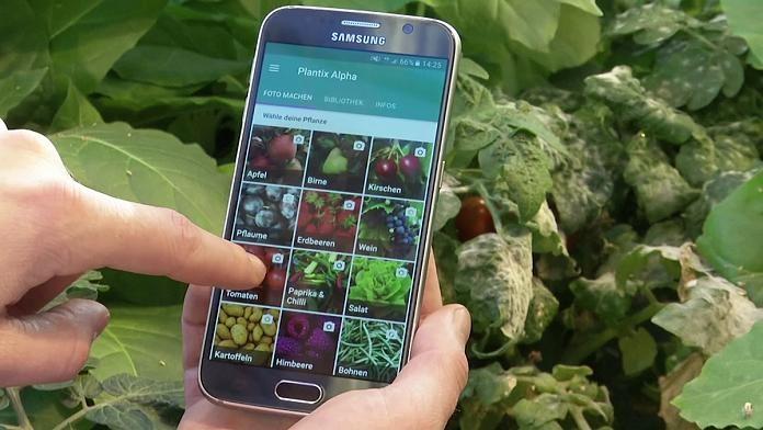 Мобільні додатки, що визначають хвороби рослин