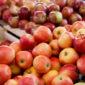 Ситуація на вітчизняному ринку яблук