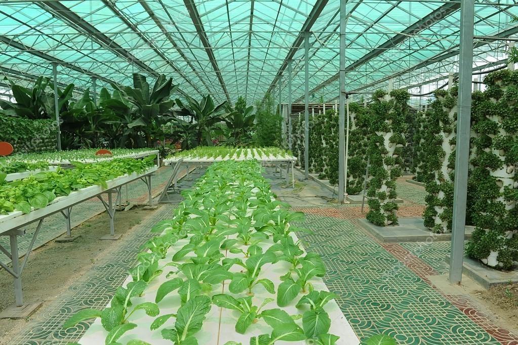 В мексиканських школах навчають вирощувати овочі без землі