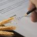 Завдяки аграрним розпискам, майже тисяча українських фермерів отримали кошти на посівну