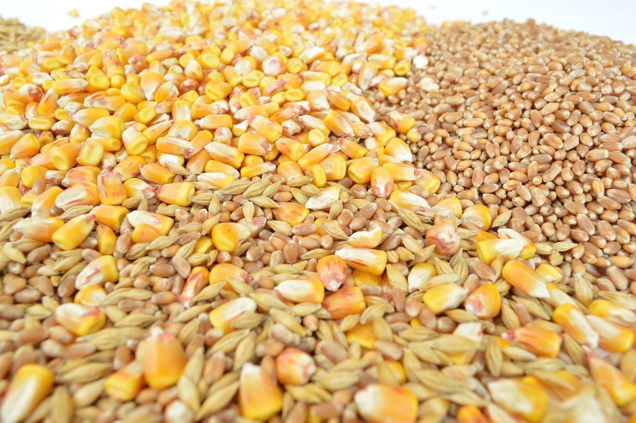 В Україні запаси зернових та олійних скоротилися на третину