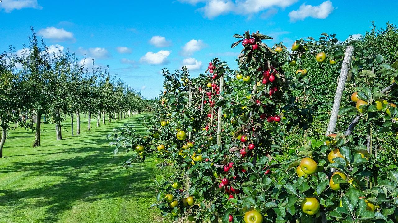 Уряд продовжив терміни подачі документів по програмам держпідтримки садівництва і тваринництва