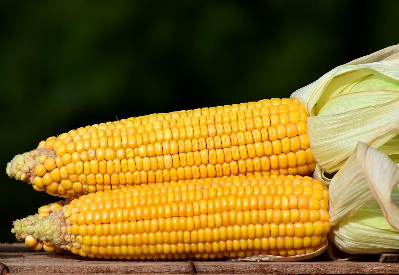 В Україні узгодили граничний обсяг експорту кукурудзи на рівні 24 млн тонн