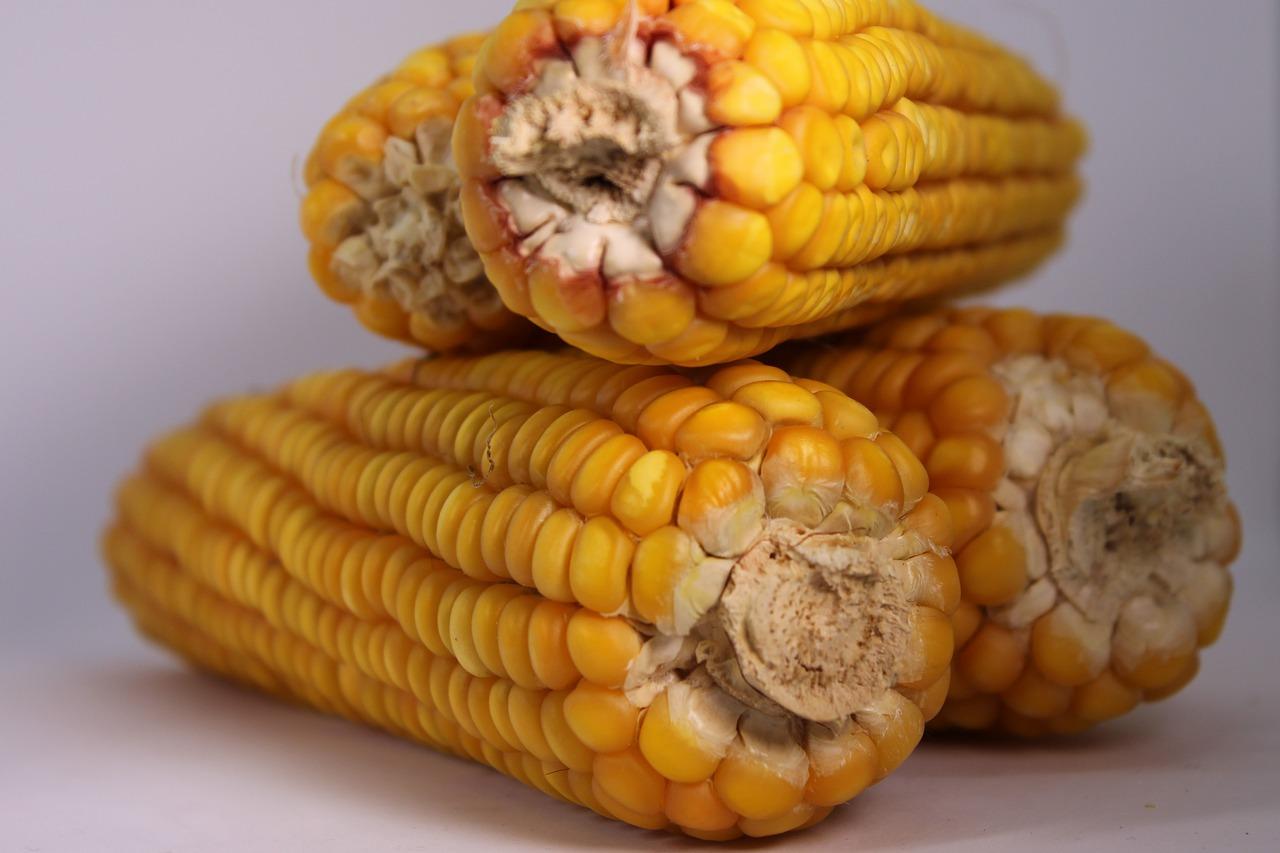 З України експортували 1,5 млн тонн кукурудзи