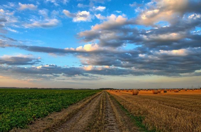 Мартин: Земельна неефективність обходиться в 1 млрд грн збитків на рік
