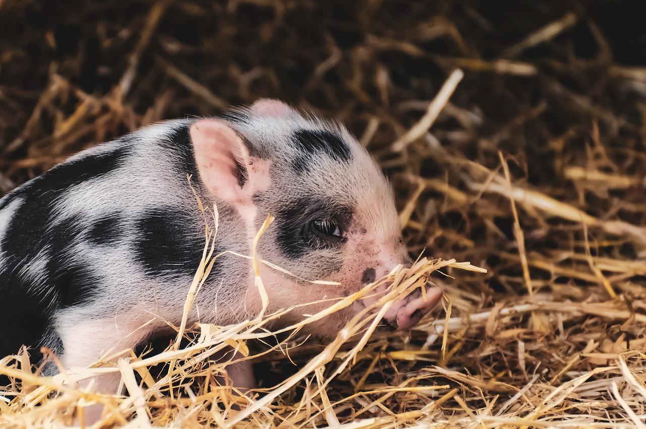 Агрохолдинг KSG Agro залучив інвесторів для розвитку м'ясопереробних потужностей