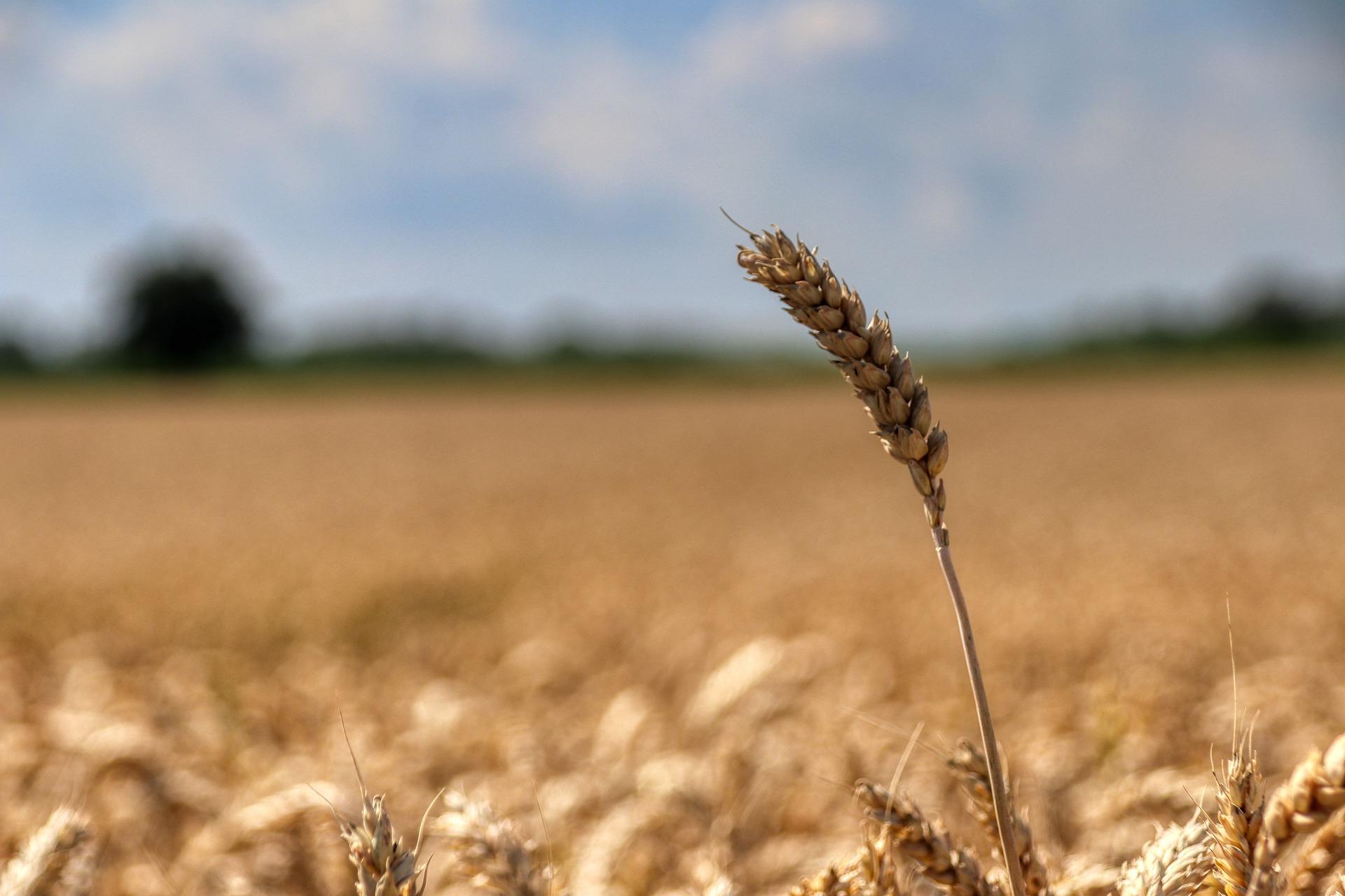 В Україні набув чинності закон про Державний аграрний реєстр