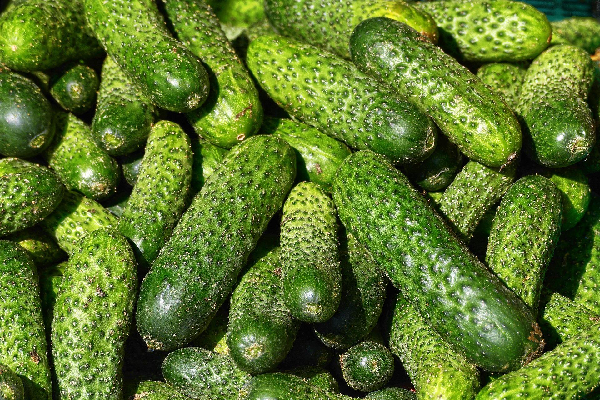 В Україні ціни на огірки знову підвищилися