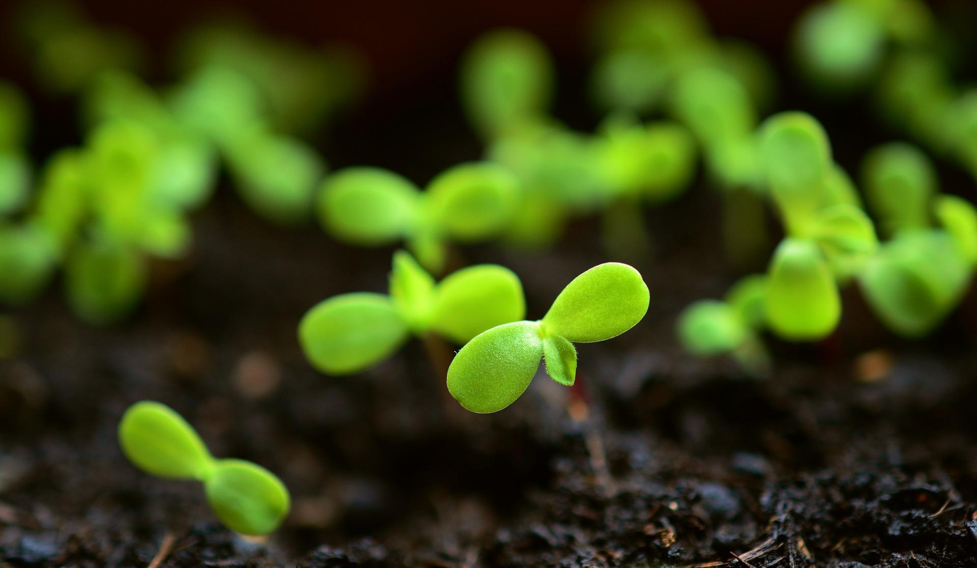 Лабораторію дослідження ґрунтів НААН зареєстрували в Міжнародній мережі з аналізу добрив