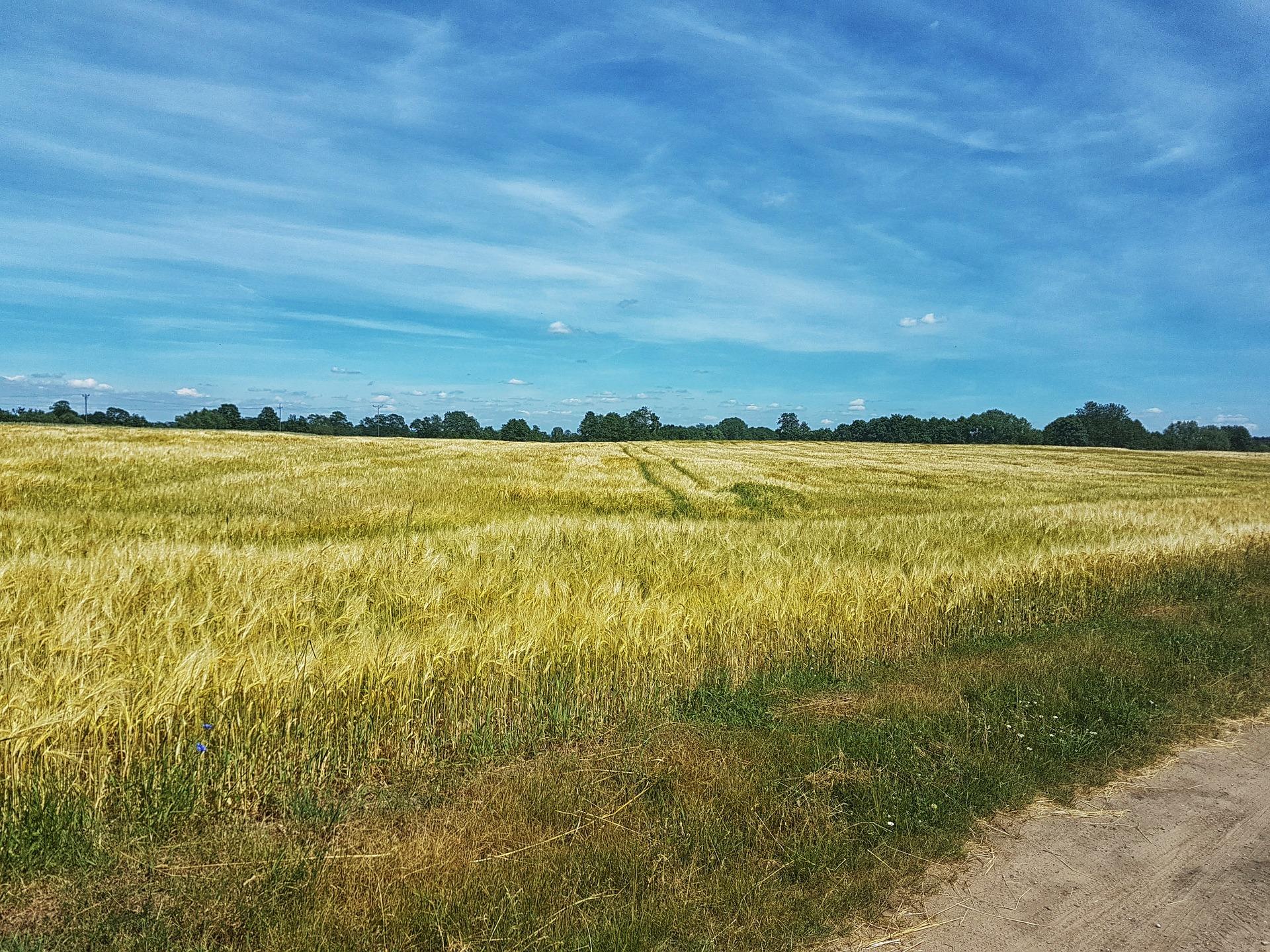 В Україні прогнозують суху, помірно теплу погоду