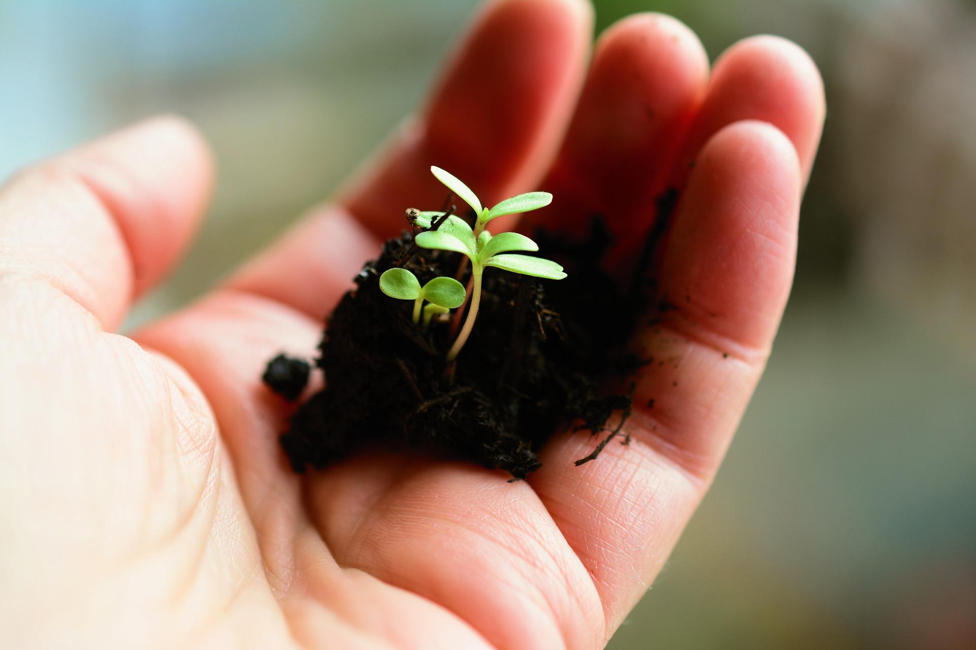 Мінекономіки співпрацюватиме з органами іноземної сертифікації для розвитку національного органічного сектору