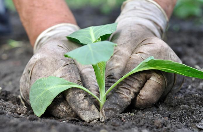 Аграрії Миколаївщини найефективніше конвертують інвестиції у прибуток