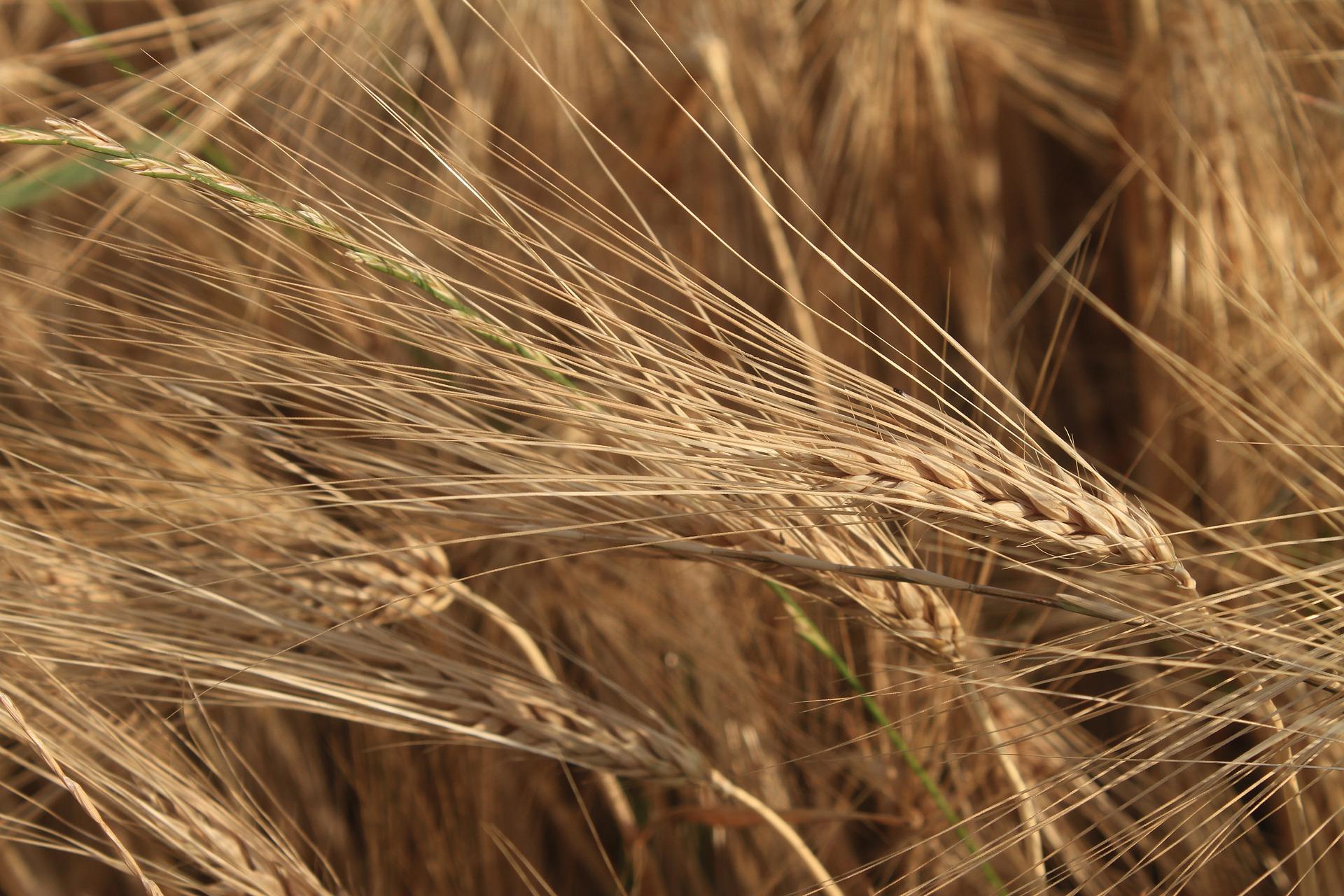З України експортовано 46,3 млн тонн зерна