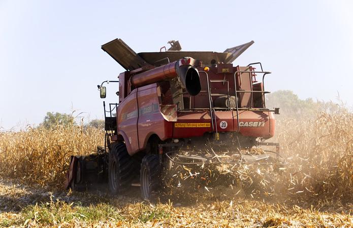 Україна намолотила майже 81 млн т зернових та олійних культур