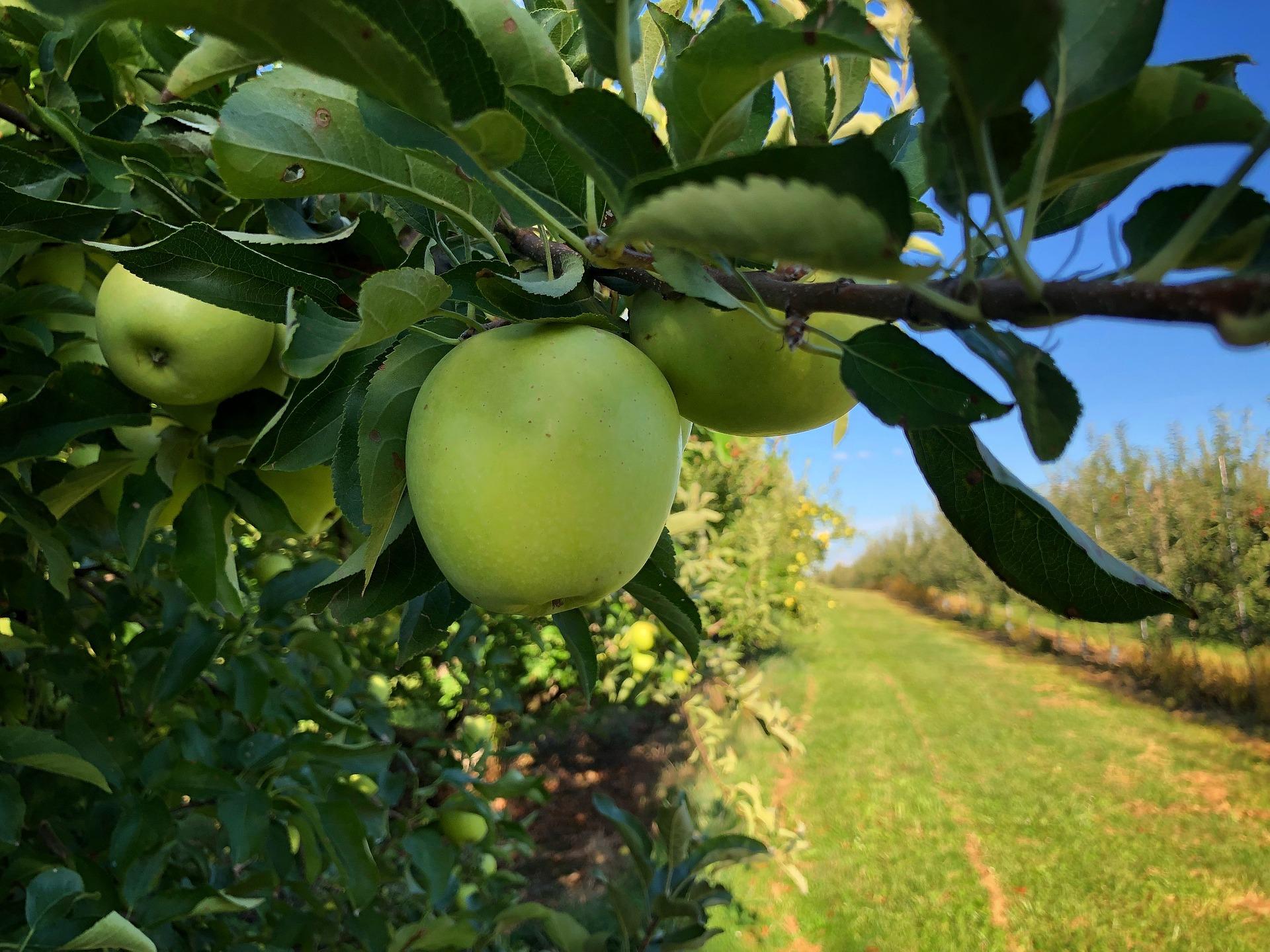 Садівникам компенсують 165 млн гривень на саджанці