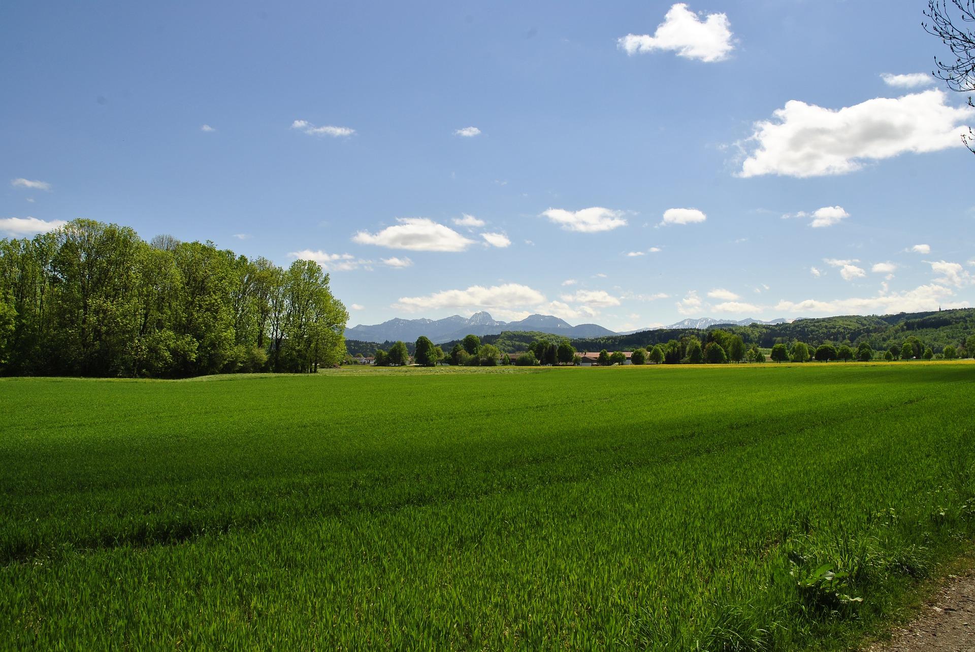 За перший місяць ринку землі середня ціна за український гектар складає 40 тис. грн