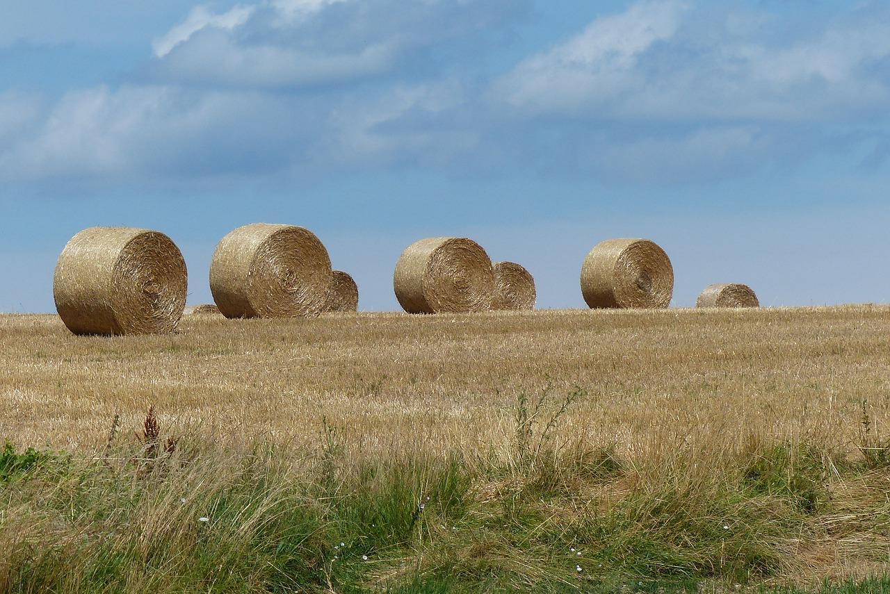 З початку роботи ринку землі продано 42,2 тис. гектарів