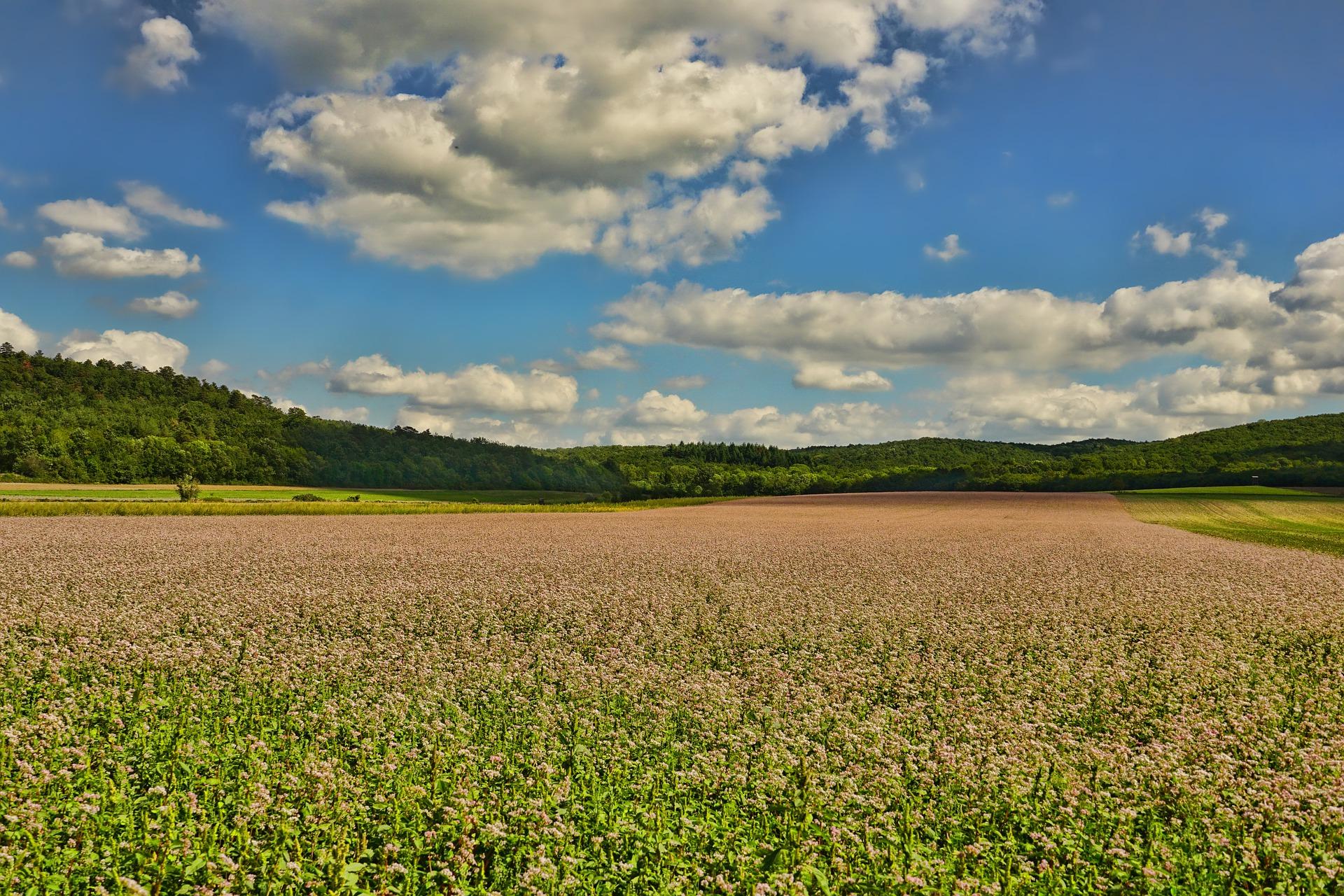 В Україні презентували практичний посібник щодо передачі земель з державної власності у комунальну