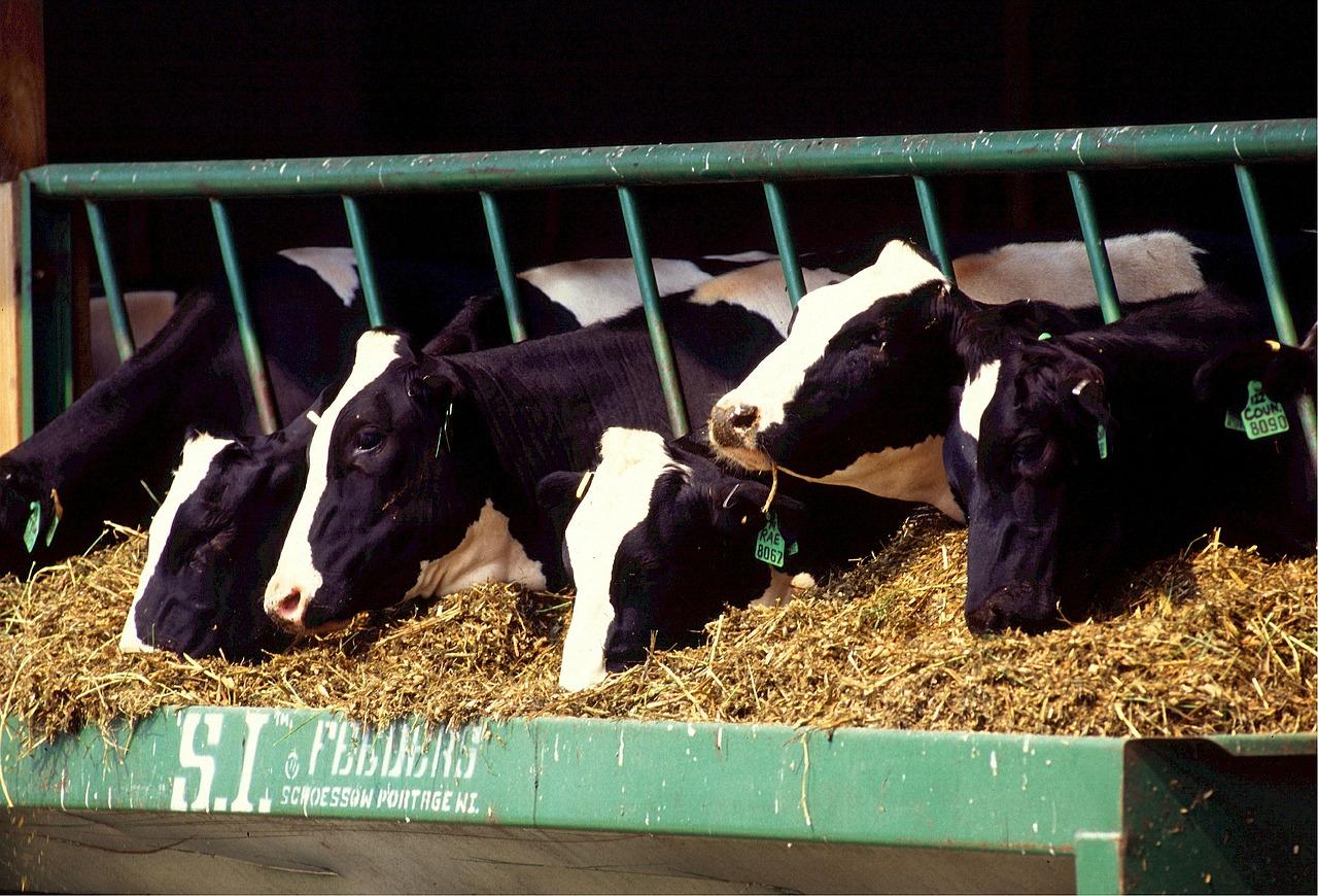 Аграрний комітет рекомендує ВРУ законопроект щодо стабілізації ринку кормів в Україні