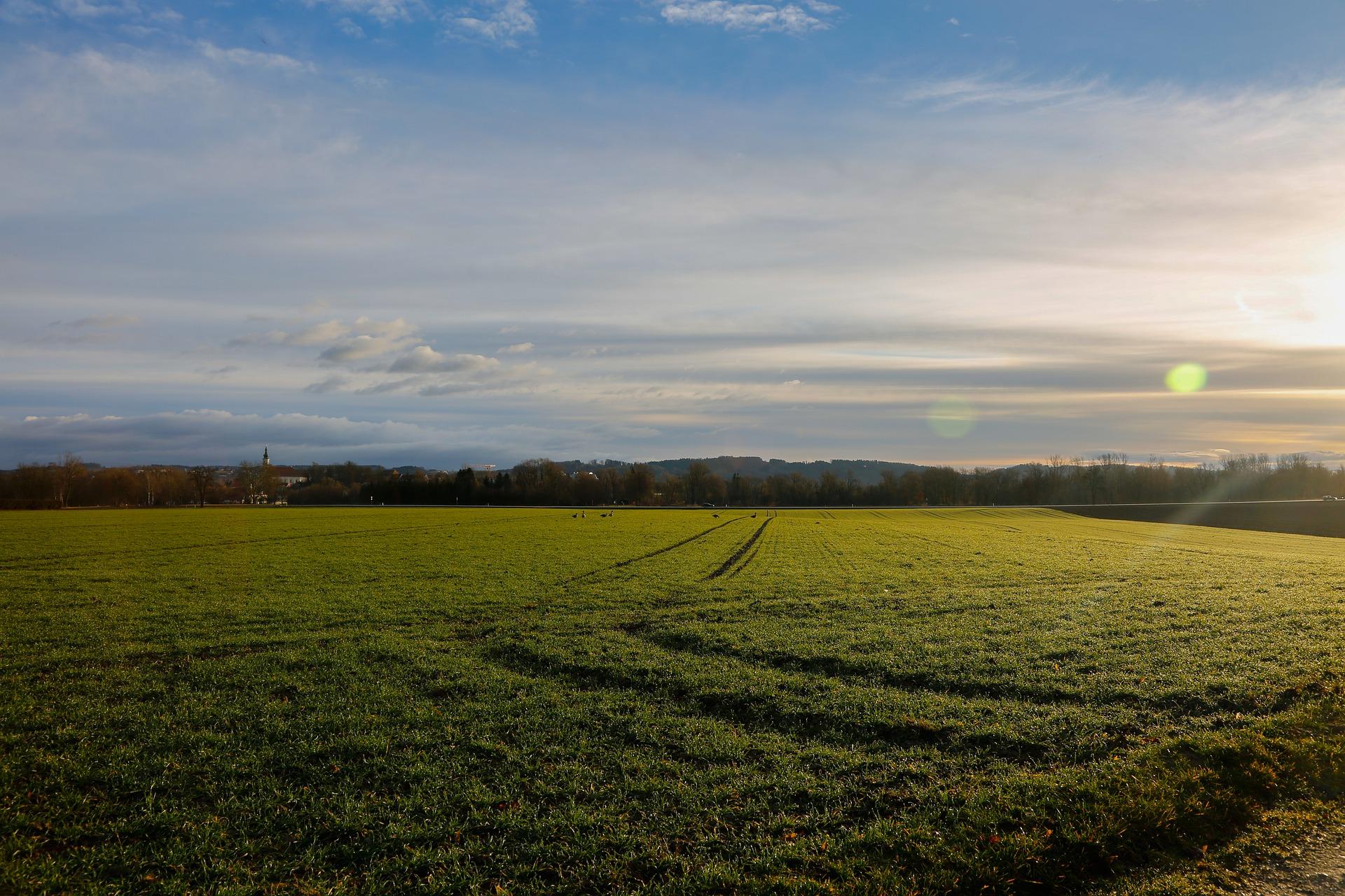 На Вінниччині 76,4% площ озимих знаходяться в доброму стані