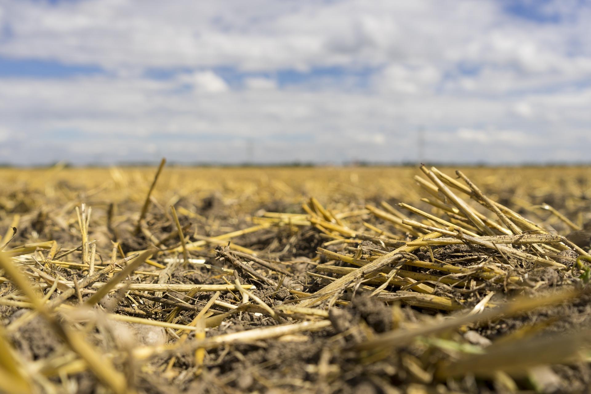 На всій території України клімат перетворюється в південний — Адаменко