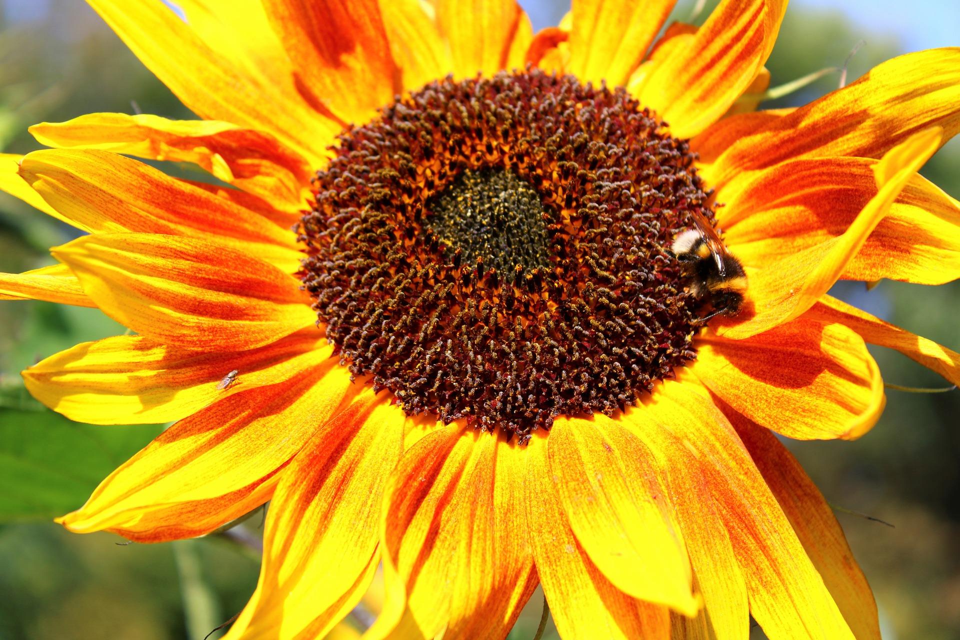 В світі підвищився попит на соняшниковий шрот