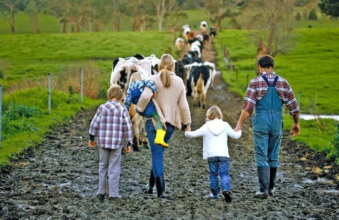 Львівщина виділить 17 млн грн на створення сімейних ферм