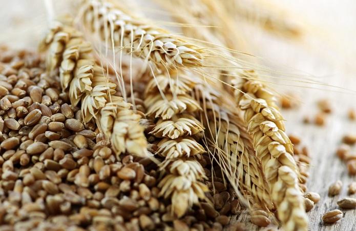 Україна експортувала 27,2 млн т зернових та зернобобових культур