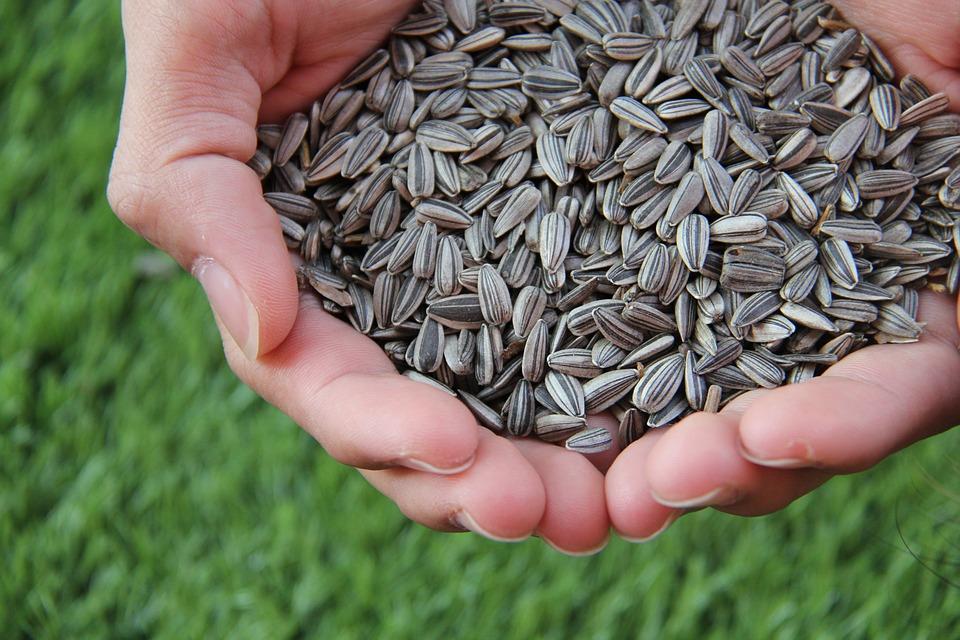 У минулому році ціни на імпортне насіння зросли на 44,3%