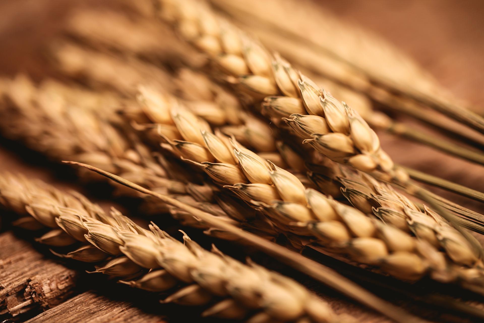 З України експортували 27,5 млн тонн зерна