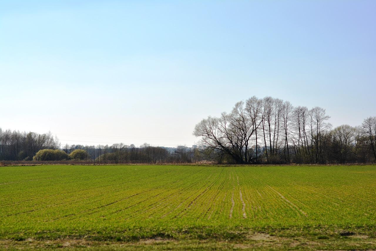 Через аномальну зимову погоду Рівненщина може залишитися без врожаю озимих
