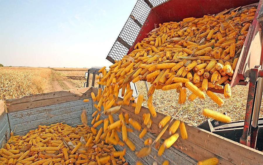 Світ олії та зерна: що відбувається з основними культурами на міжнародних ринках?