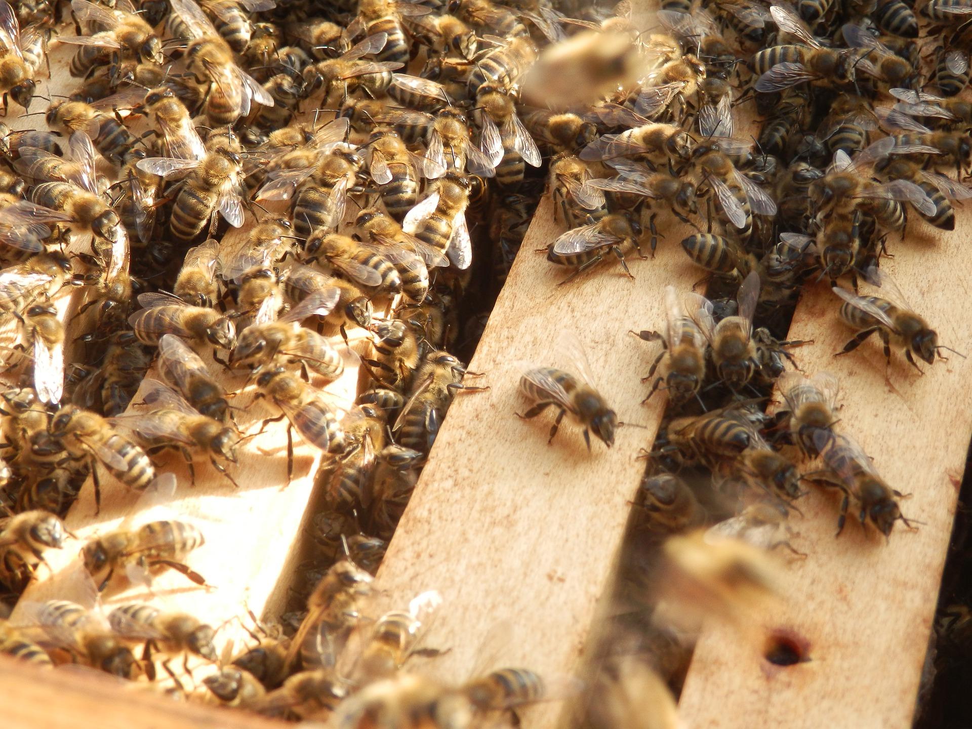 Мінекономіки перерозподілить кошти на держпідтримку бджільництва, щоб усі пасічники отримали допомогу — Висоцький