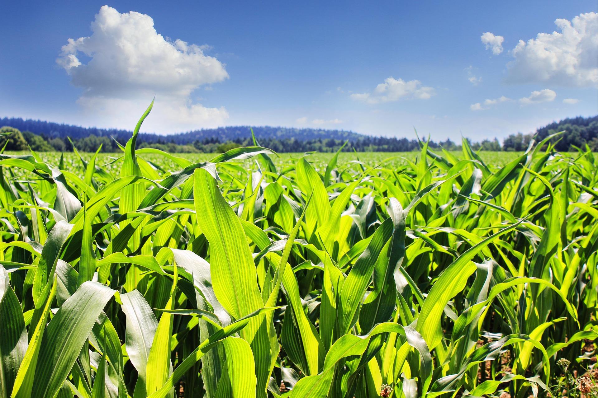 Держпродспоживслужба підтримала позицію Американської торговельної палати щодо допустимого вмісту хлорпірифосу у агропродукції