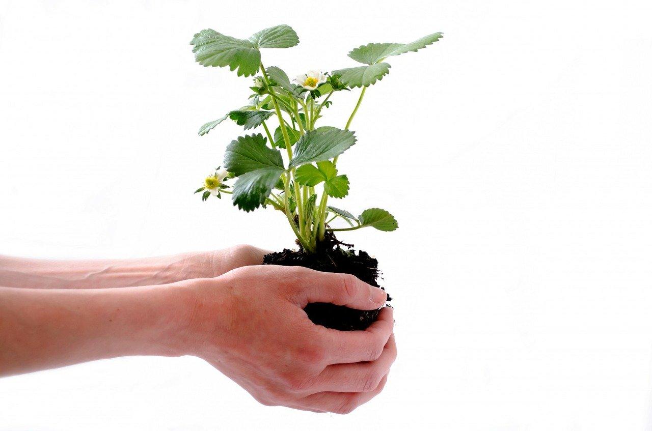 У ВРУ пропонують внести зміни до Митного кодексу через закон щодо захисту рослин