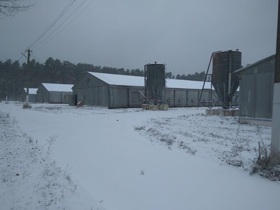 На продаж виставлено 5 бройлерних ферм «Агромарса»