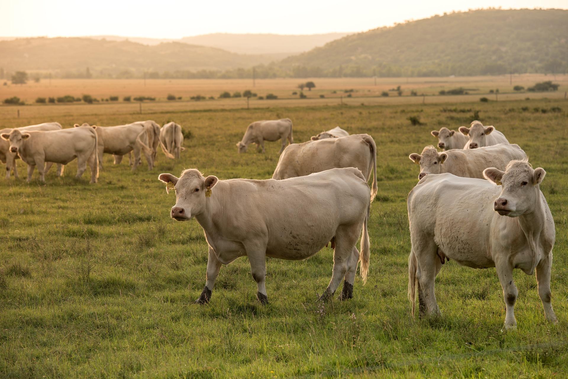 Миколаївську спілку власників корів зобов'язали повернути 333 га землі