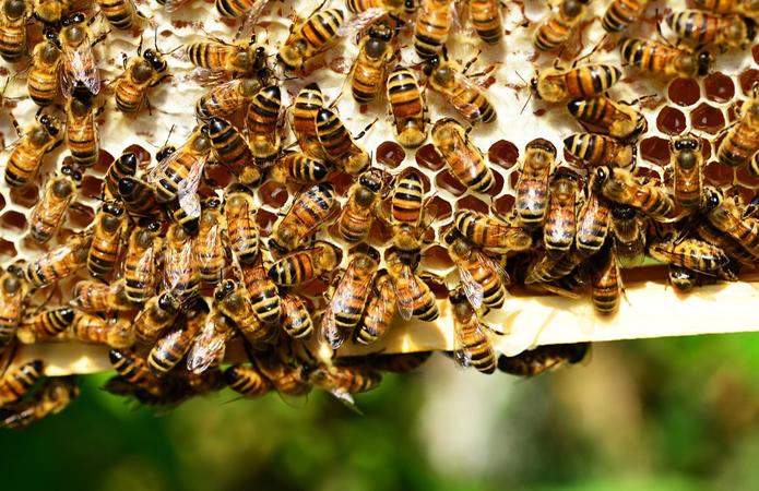 На Кіровоградщині створять кластер органічного бджільництва