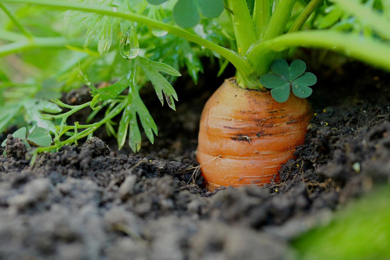 В Україні спостерігається скорочення площ під овочами
