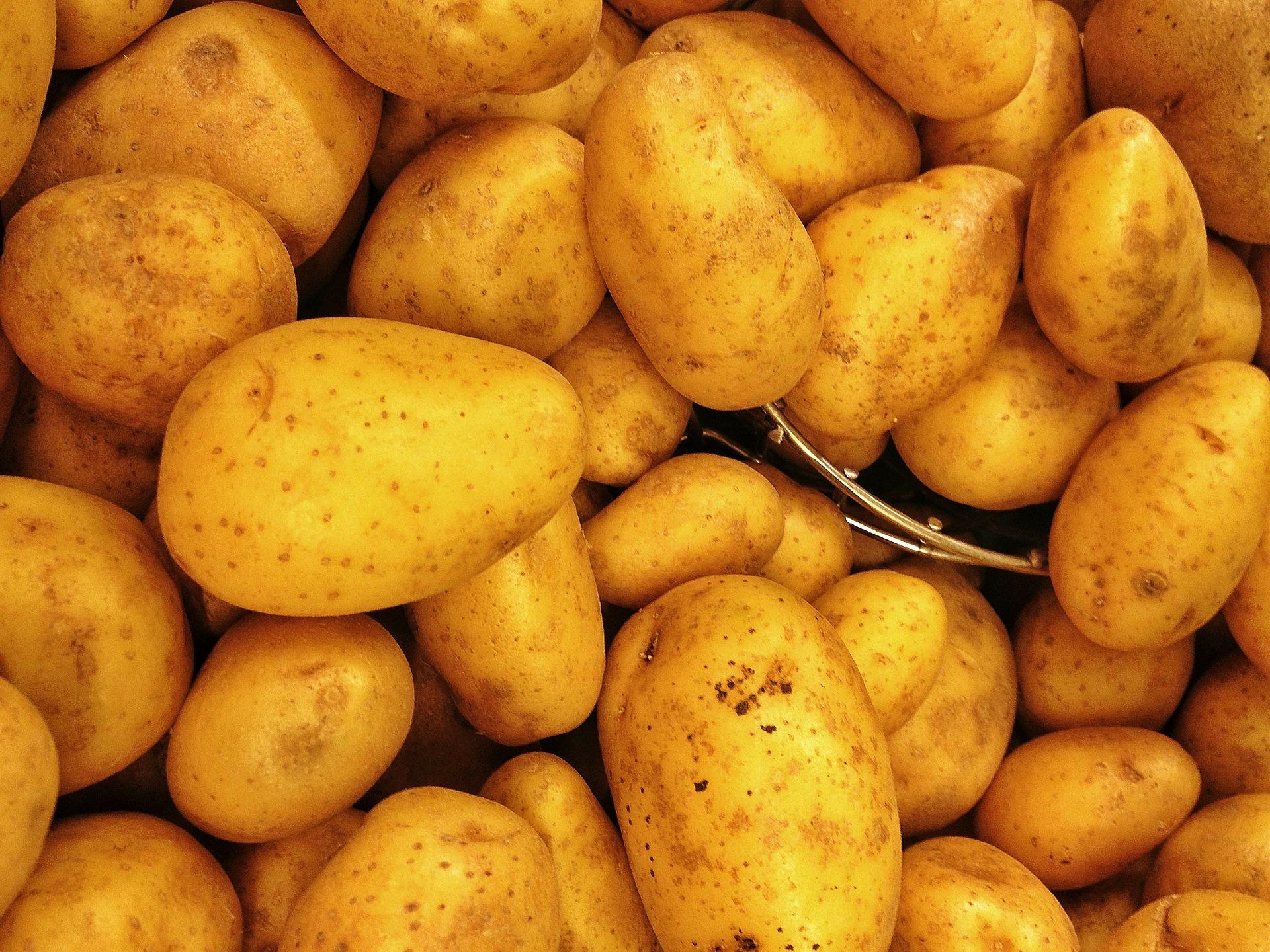 Висоцький назвав чотири критично важливі напрями для розвитку картоплярства