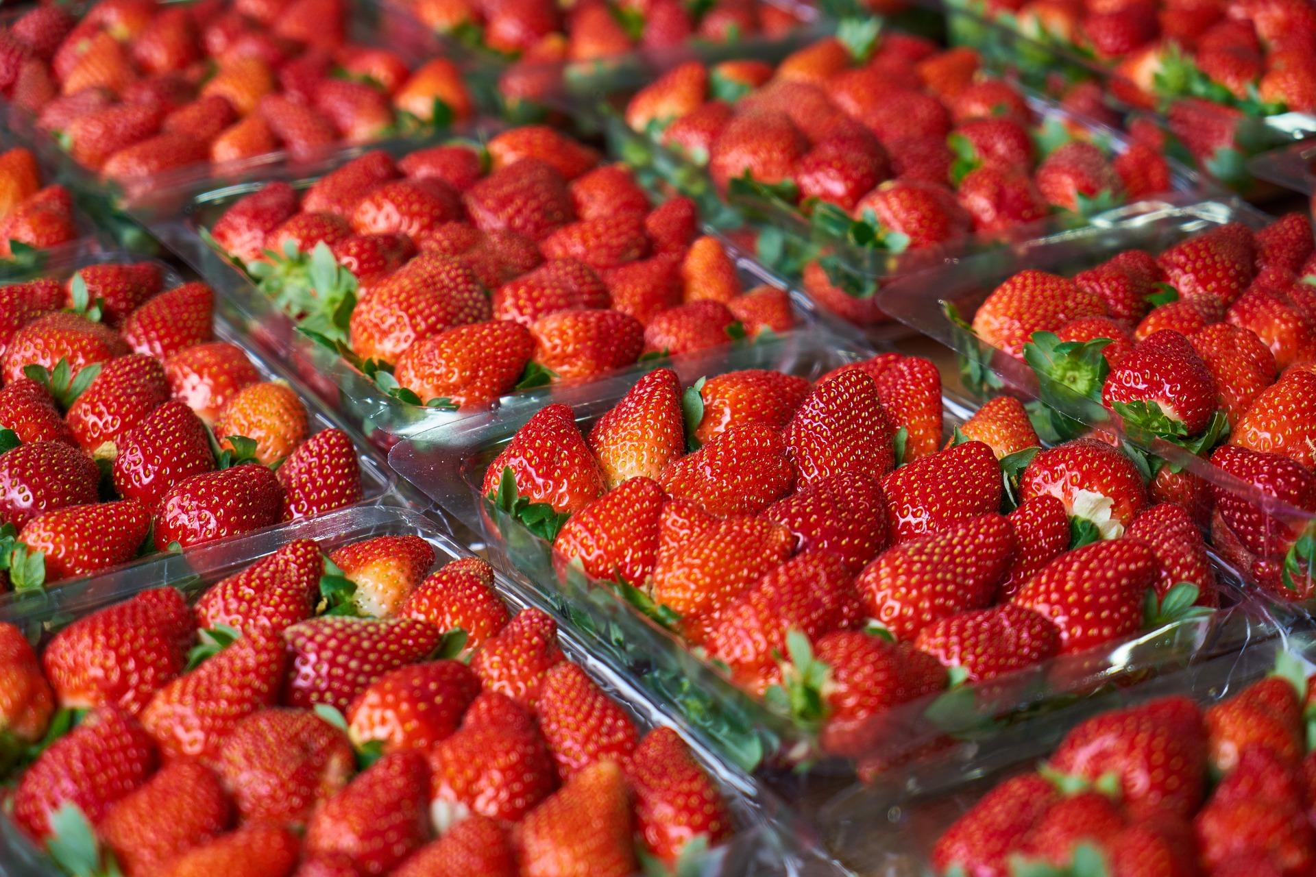 У селищі на Волині фермери щоденно збирають по 100 тонн полуниці