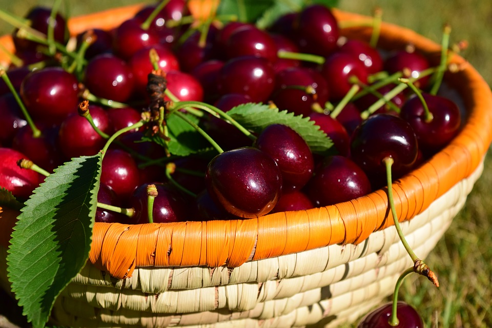 В Україні зросли площі під промисловими вишневими садами