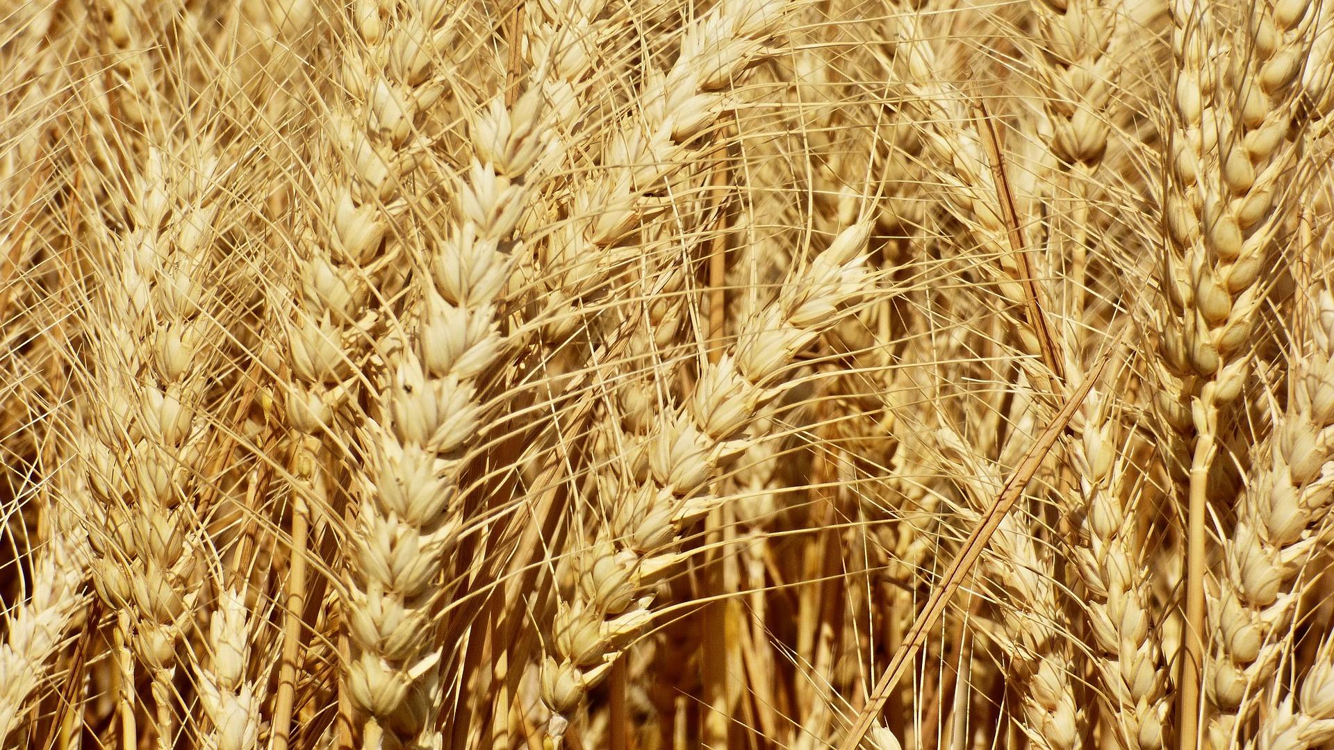 Масове агрострахування забезпечить дієвий механізм фінансової підтримки фермерів