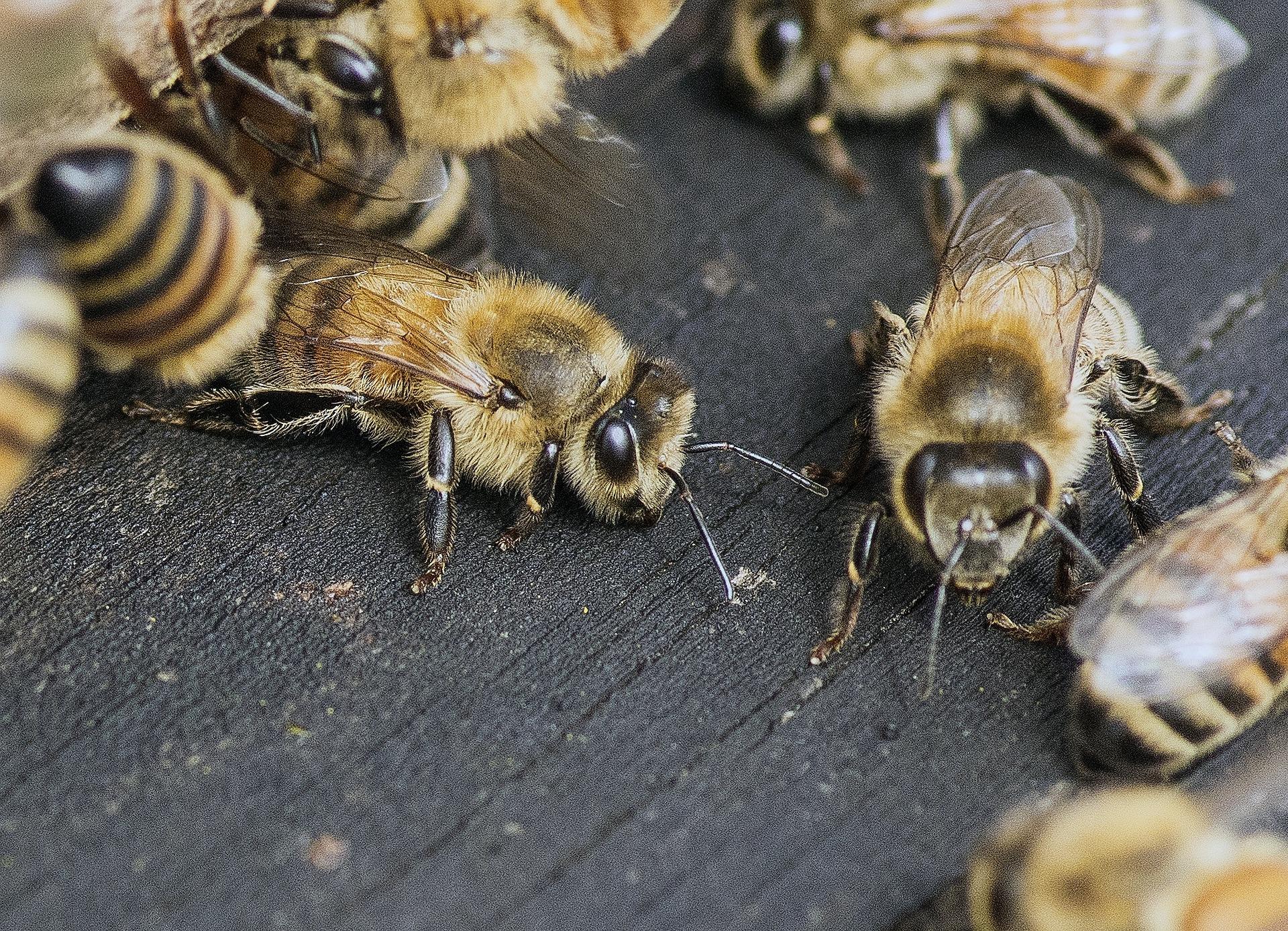 Виробники меду можуть отримати гранти від міжнародних проектів