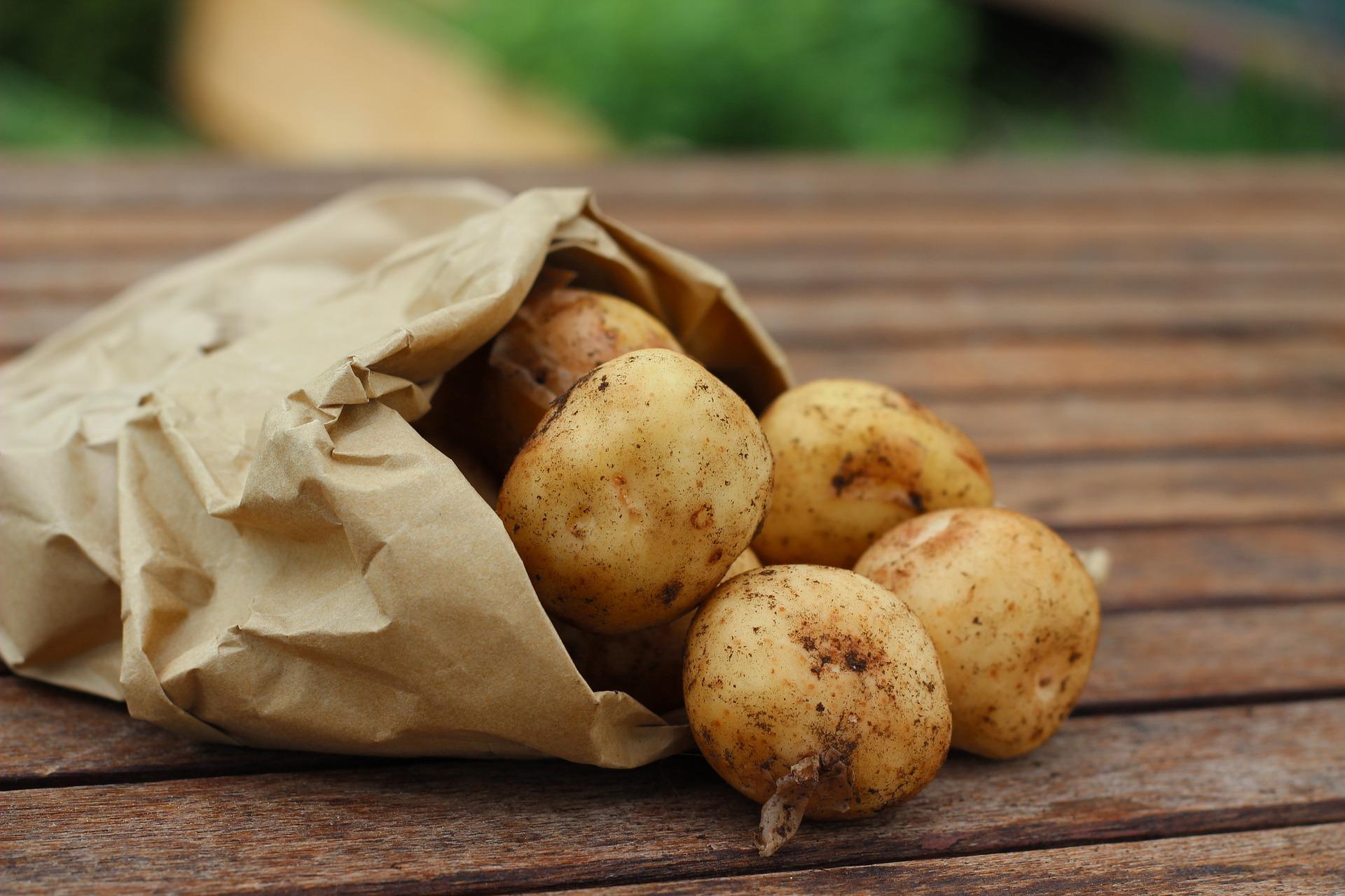Відповідність вимогам міжнародних стандартів допоможе налагодити експорт української картоплі до ЄС — Магалецька
